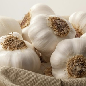 Garlic: The Top Natural Antibiotic
